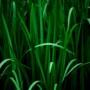 Grenen Fine Art Plant
